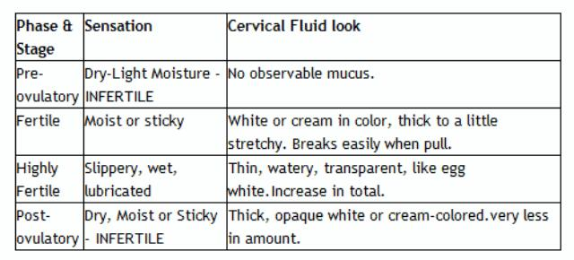 Fifth image of Cervical Mucus Is Responsible For Several Important Jobs with Cervical Mucus throughout the cycle - Glow Community
