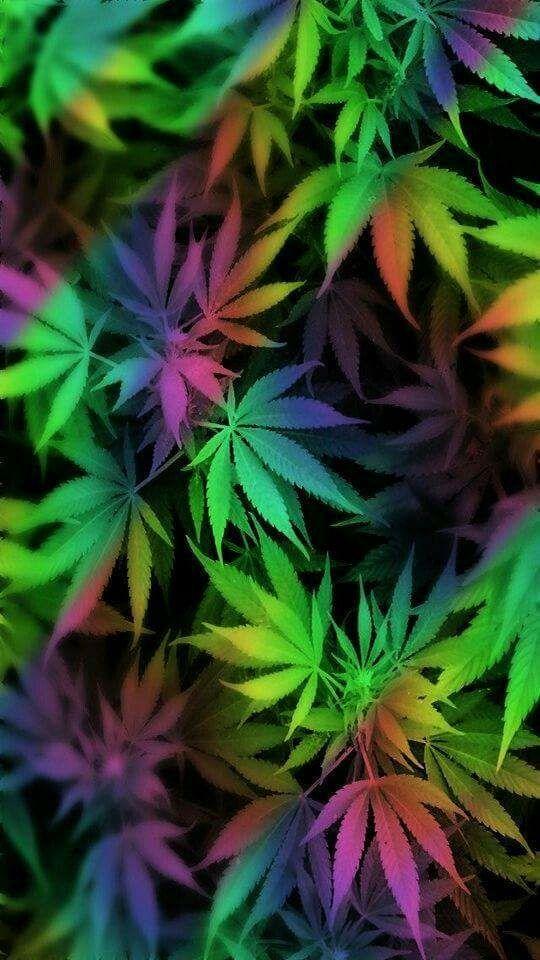 Cannabis & Pregnancy