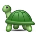 Kindara Fertile Turtles