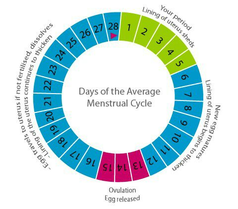 Short cycle = Fertile window starts right after period - Glow Community