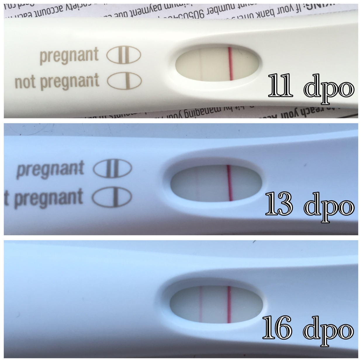 First Response Progression Top 2 Are Frer Bottom One Is First