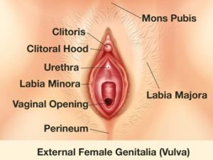 Hooded clitoris picture