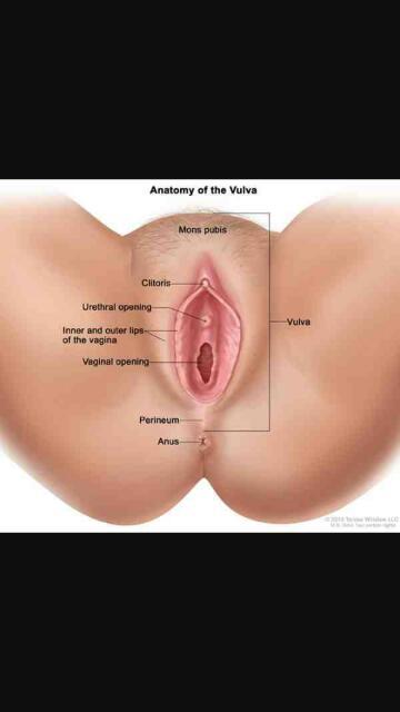 vulva vs. vagina - glow community