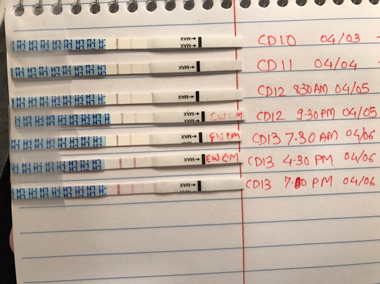 Does CD 13 4:30pm indicate positive opk? Also, does it mean